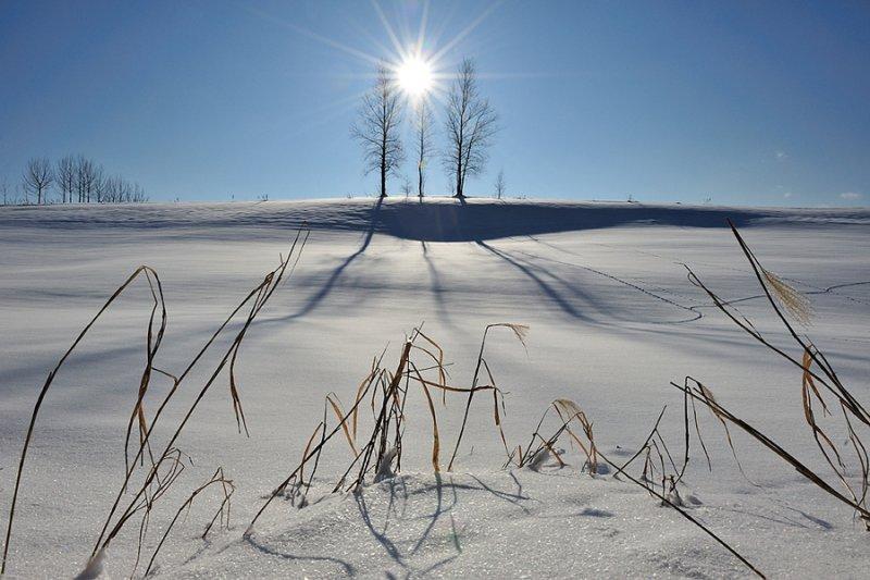 Ландшафтная сказка в фотографиях Кента Шираиши - №20