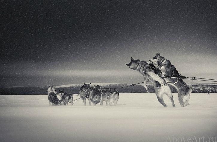 Antti Viitala - №1