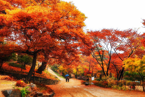 Невероятные корейские пейзажи. - №12