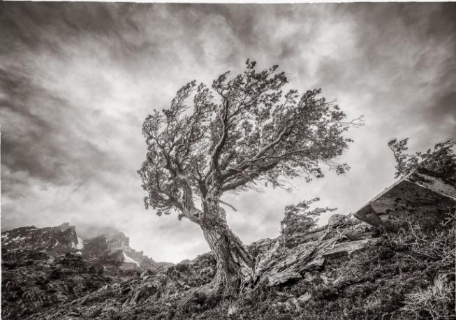 Фотограф Eliseo Miciu - №16