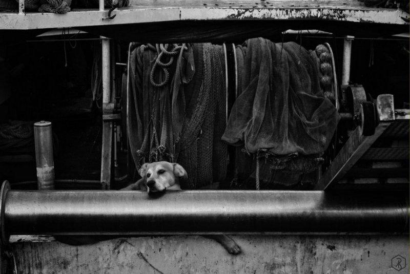 Итальянский фотограф Раффаэле Монтепаоне - №12