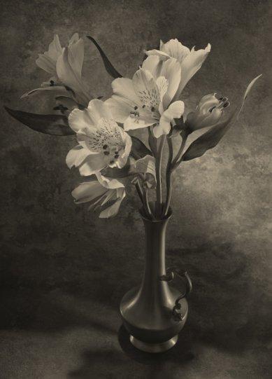Фотограф Уильям Кастеллана - №15