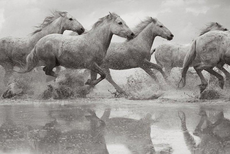 Фотограф Дрю Доггетт - №2