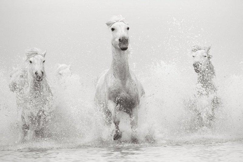 Фотограф Дрю Доггетт - №13