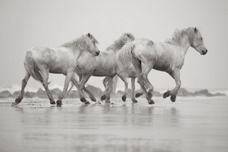 Фотограф Дрю Доггетт - №17