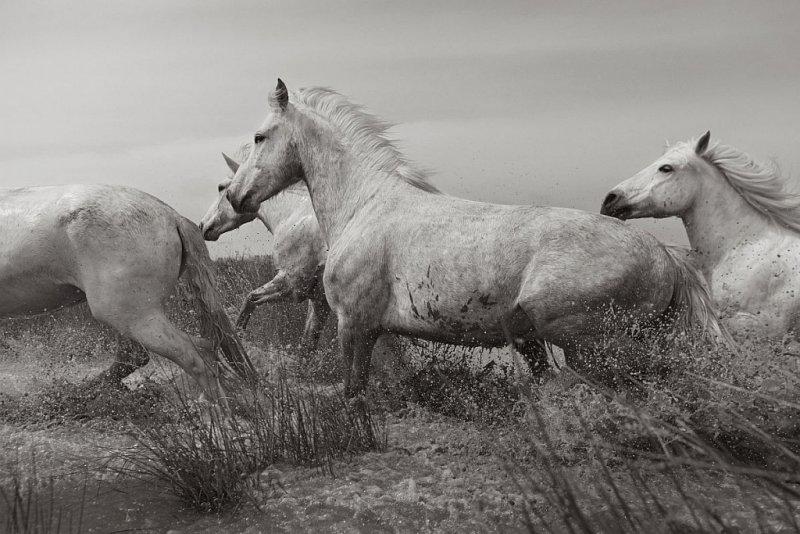 Фотограф Дрю Доггетт - №21