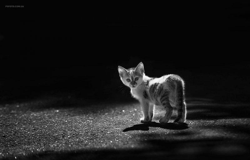 Портреты животных от фотографа Сергея Полюшко - №14