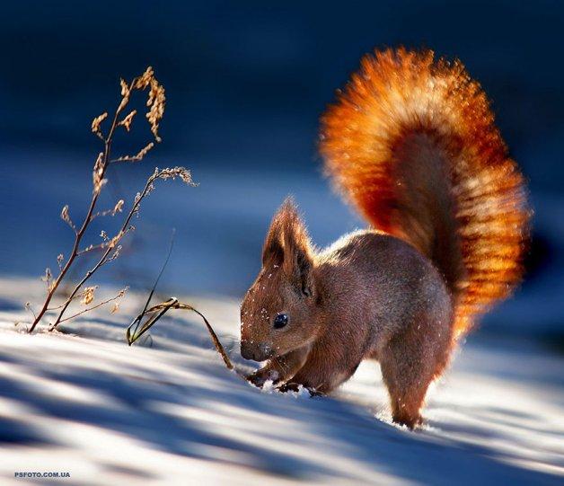 Портреты животных от фотографа Сергея Полюшко - №18