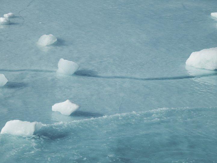 Арктика в фотографиях Дайан Тафт - №5