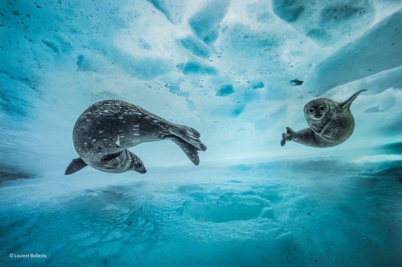 Автор фото: Лоран Баллеста. «Плавательный бассейн»
