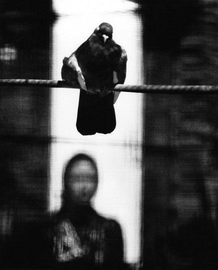 Британский фотограф Сэм Хаскинс - №14
