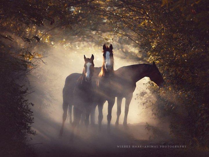 Фотограф Wiebke Haas - №3