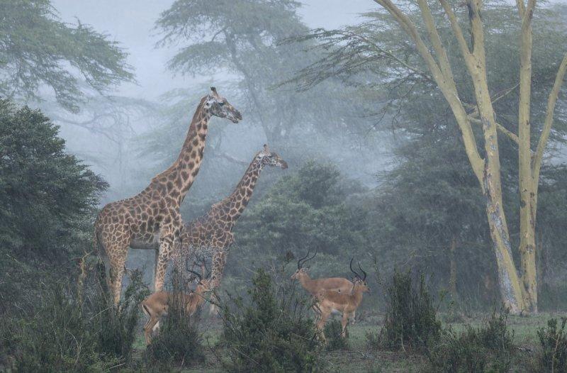 Автор фото: Хосе Фрагозу (José Fragozo). Место съёмки: Национальный парк Найроби, Кения.