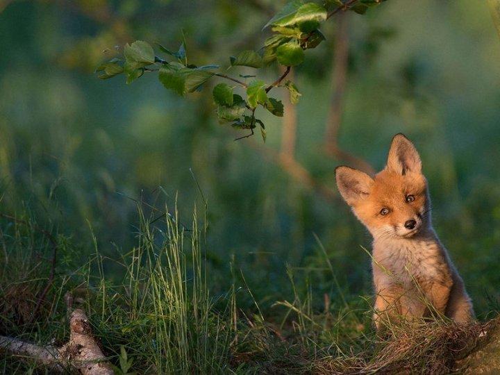20 самых шедевральных снимков, сделанных для National Geographic - №18