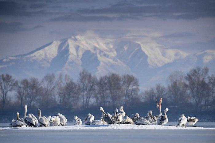 Bird Photographer of the Year - №2