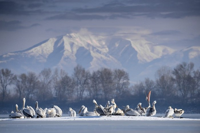 Bird Photographer of the Year - №2
