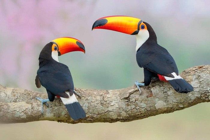 Bird Photographer of the Year - №6