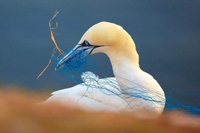 Bird Photographer of the Year - №10