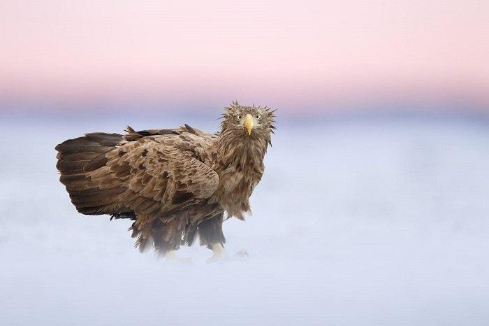 Bird Photographer of the Year - №14