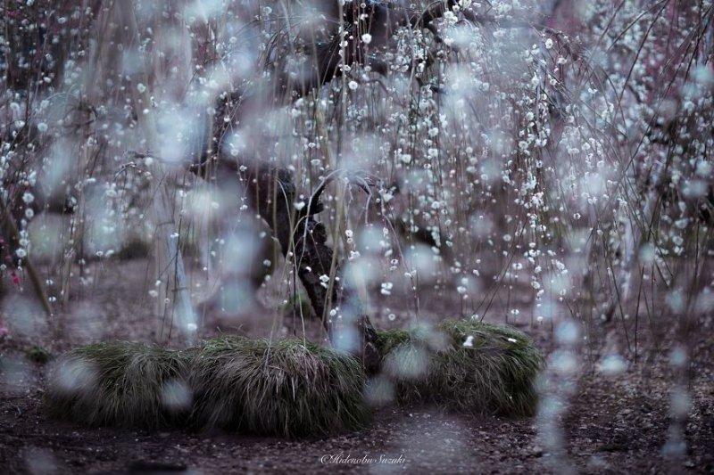 Фотограф Хиденобу Сузуки - №2