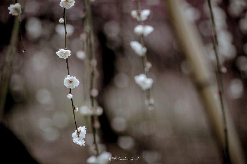 Фотограф Хиденобу Сузуки - №6