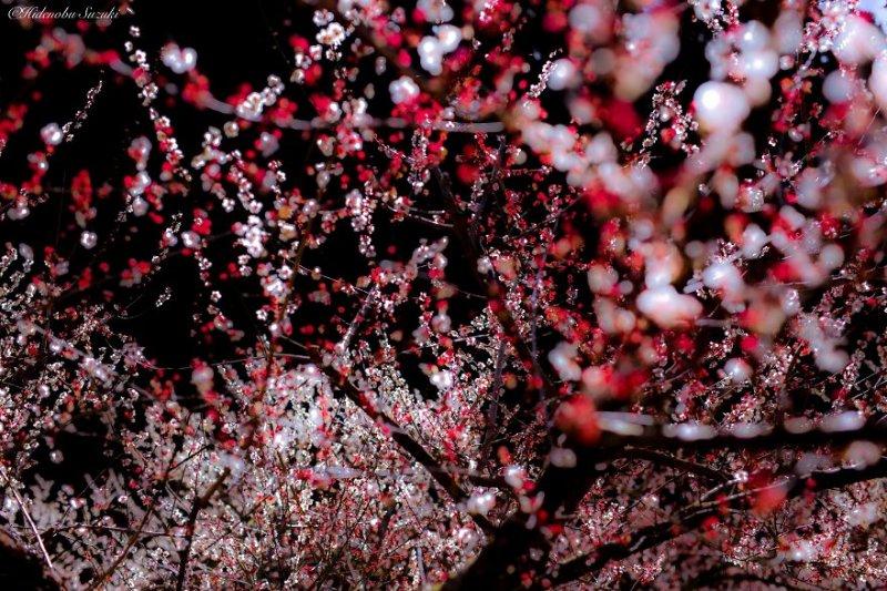 Фотограф Хиденобу Сузуки - №10