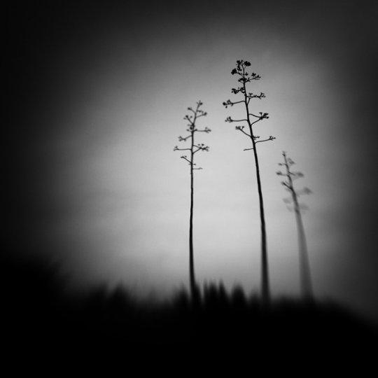 Фотограф Стив Ландерос - №7