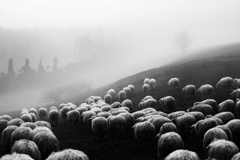 Фотограф Марко Сгарби - №11