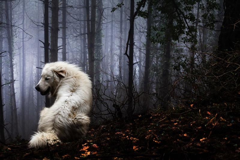 Фотограф Марко Сгарби - №19