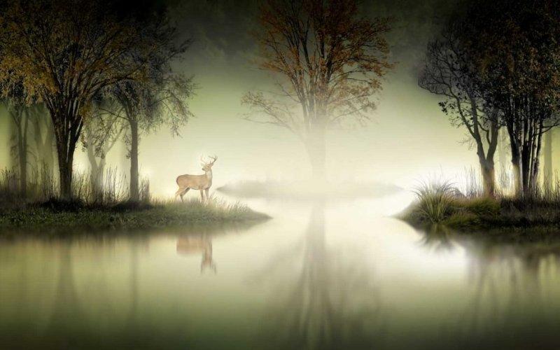 Фотограф Nasser Osman - №9
