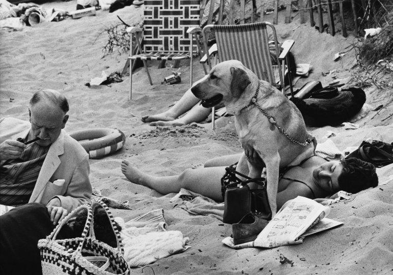 Фотографии Ширли Бейкер 1960-х годов - №14