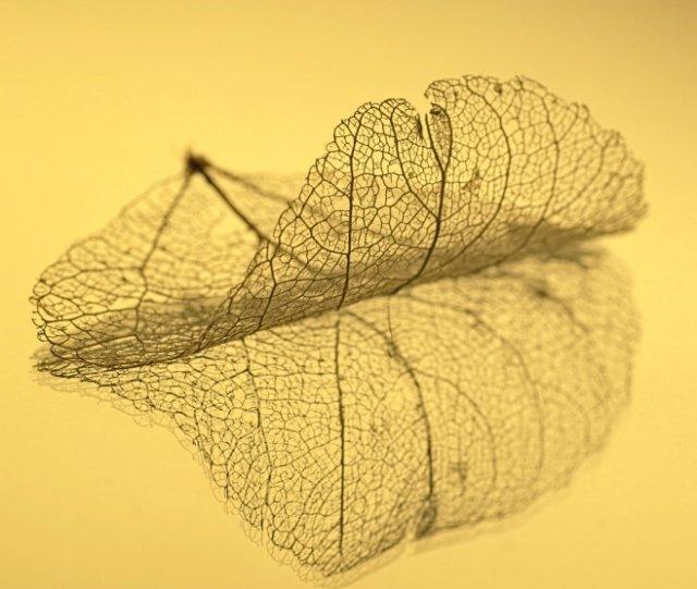Абстрактное искусство в простых листьях - №5