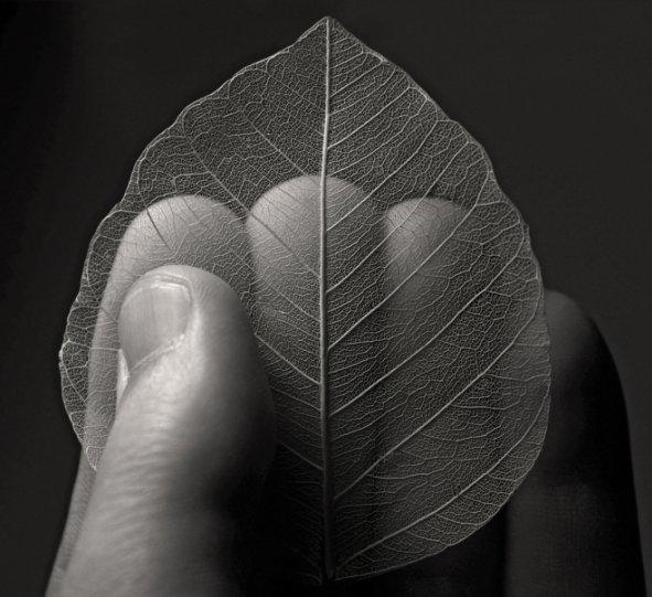 Абстрактное искусство в простых листьях - №15