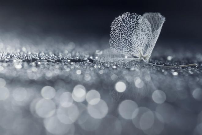 Абстрактное искусство в простых листьях - №9