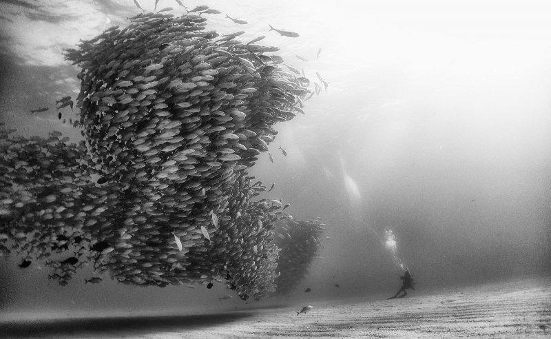 Жизнь под водой от фотографа Ануара Патьяне - №2