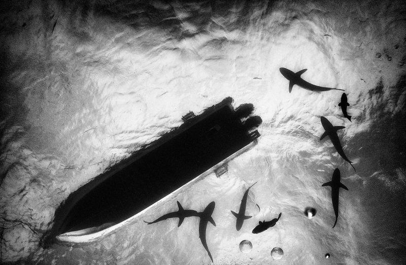 Жизнь под водой от фотографа Ануара Патьяне - №4