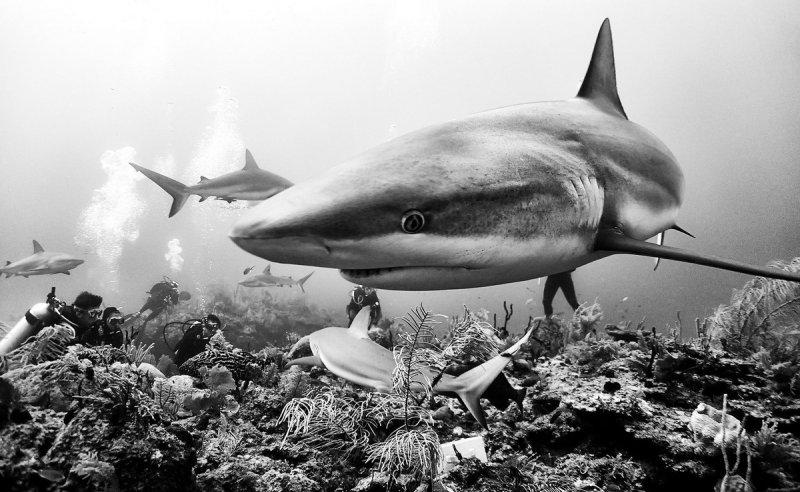 Жизнь под водой от фотографа Ануара Патьяне - №10