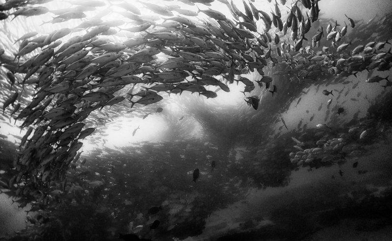 Жизнь под водой от фотографа Ануара Патьяне - №16