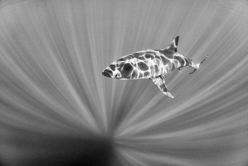 Жизнь под водой от фотографа Ануара Патьяне - №15