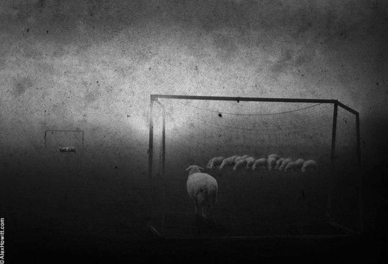 Художественные фотографии Алекса Хоуита - №4