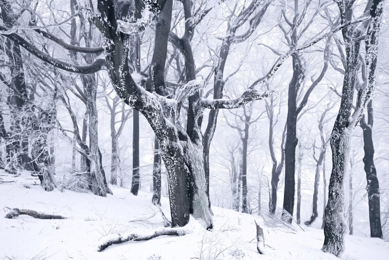 Килиан Шоенбергер «Зимняя сказка» - №20