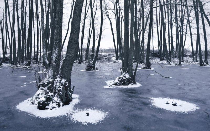 Килиан Шоенбергер «Зимняя сказка» - №24
