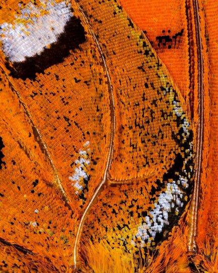 «Крылья бабочек». Фотограф Крис Перани - №6