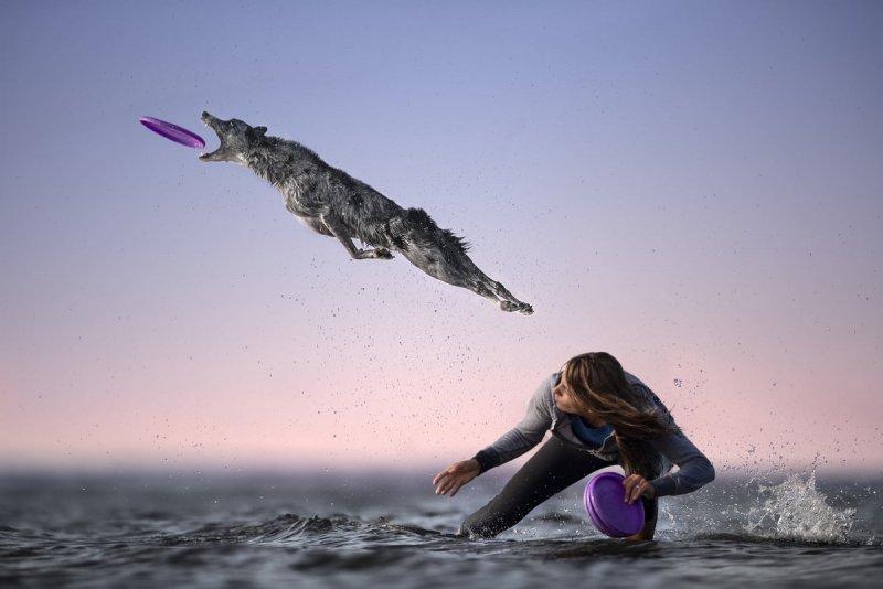 Собаки в фотографиях Клаудио Пикколи - №6