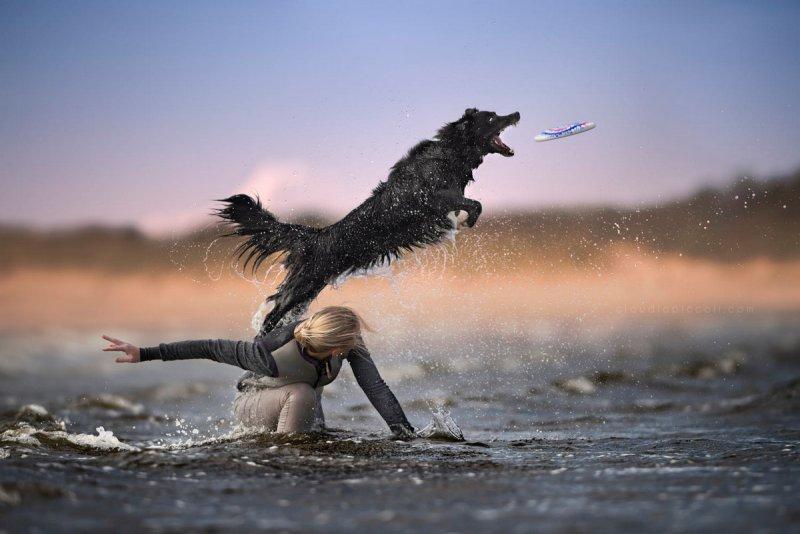 Собаки в фотографиях Клаудио Пикколи - №24
