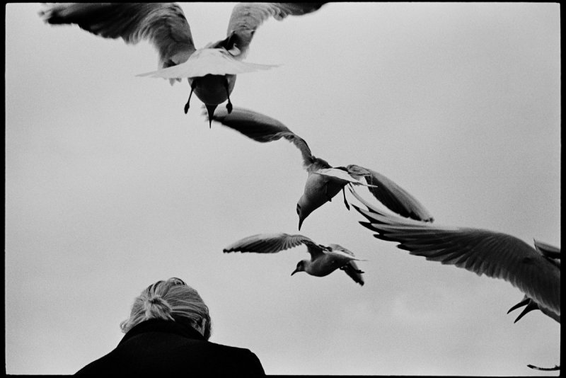 Фотограф Сирил Дрюар - №2
