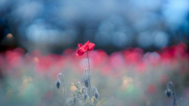 Цветы - главные герои кадра - №11