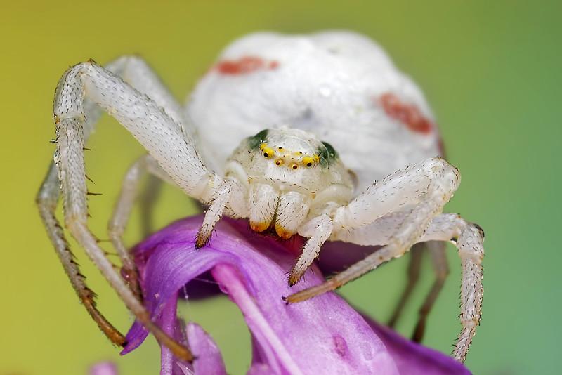 Мир насекомых - №4