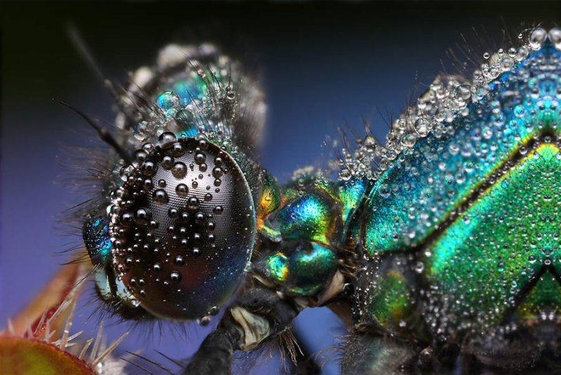 Мир насекомых - №9