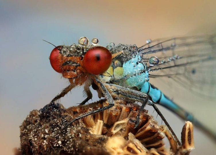Мир насекомых - №12
